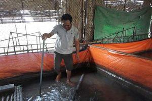 Hưng Yên: Lót bạt nuôi lươn không bùn, nông dân có thêm tiền tiêu