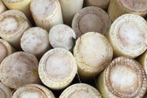 Bài thuốc chữa sỏi thận siêu hiệu quả từ lõi chuối