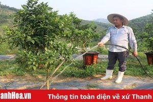 Chuyển đổi 2.862,8 ha đất trồng lúa sang trồng cây khác