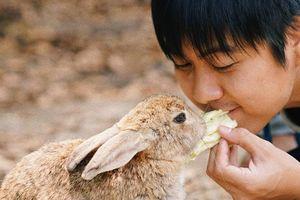Đảo thỏ Nhật Bản, thiên đường của sự đáng yêu hút khách du lịch