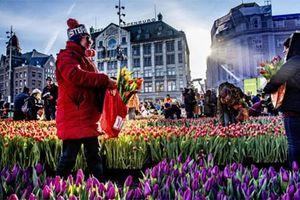 Thủ đô Amsterdam tìm cách 'đuổi' khách du lịch