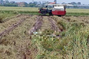 Đang gặt lúa trên đồng, kinh hãi phát hiện thi thể đang phân hủy mạnh