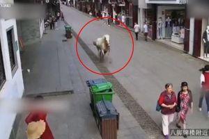 Ngựa chạy trốn khỏi đám cưới, lao điên cuồng vào người đi bộ