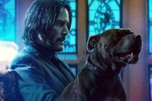 Giải mã vì sao 'John Wick: Parabellum' 'hạ bệ' 'Avengers: Endgame'