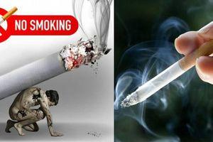 Tổ chức kiểm tra việc thực hiện Luật Phòng, chống tác hại thuốc lá