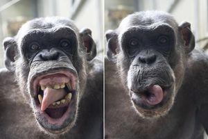 Bực bội nhiếp ảnh gia, tinh tinh quyết làm mặt xấu