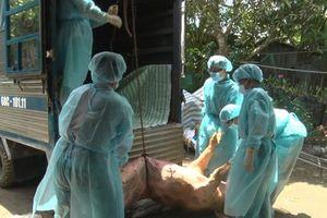 Sẽ xử lý hình sự một số vụ việc liên quan dịch tả lợn châu Phi