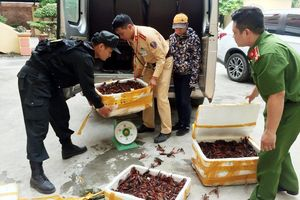 Lái xe đường dài chở gần 50 kg tôm hùm đất nhập lậu Trung Quốc