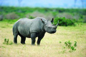 Động vật sẽ 'thu nhỏ' để đối phó với biến đổi khí hậu