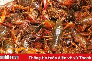 Tăng cường kiểm soát loài tôm càng đỏ trên địa bàn tỉnh