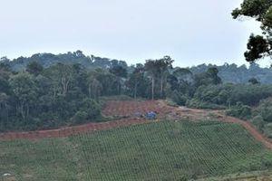 Sau lệnh đóng cửa, rừng tự nhiên Tây Nguyên tiếp tục giảm