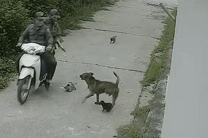Hai tên trộm dùng súng điện trộm chó trong 3 giây