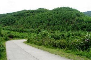 Thu hồi đất trồng rừng của InnovGreen: Doanh nghiệp xin trả