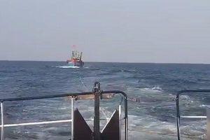 Cứu 17 ngư dân tàu cá gặp nạn trên đường phân định Vịnh Bắc Bộ