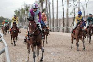 'Mã sư' tiết lộ tuyệt chiêu rèn nài ngựa, bóc mẽ trò đỏ đen trên lưng 'chiến mã'