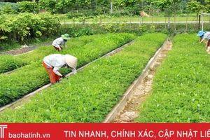 Hà Tĩnh sản xuất 3 triệu cây giống, trồng hơn 1.700 ha rừng