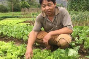 Chỉ trồng rau tầm bóp dại và vài loài rau ăn lá mà thu tiền rất khá