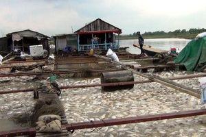 Gần 1.000 tấn cá bè chết trên sông La Ngà do thiên tai