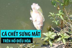 Cá lại chết sưng mắt trên hồ điều hòa Nguyễn Du, hôi thối nồng nặc