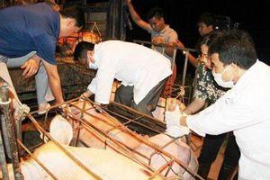 Tuyên Quang bác thông tin lợn của Dabaco bị nhiễm dịch tả lợn châu Phi