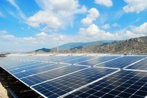Điện mặt trời 'nở rộ': Các doanh nghiệp lãi bao nhiêu?