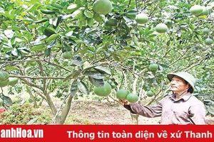 Huyện Thạch Thành thực hiện hiệu quả các chính sách dân tộc