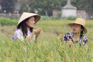 7 năm làm lúa hữu cơ, dân Đồng Phú sống đời no ấm