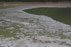 Thái Nguyên: Xác định nguyên nhân, tìm phương án xử lý tính trạng ô nhiễm nguồn nước tại hồ Vai Miếu
