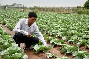 Đảm bảo chất lượng tại các vùng sản xuất rau an toàn