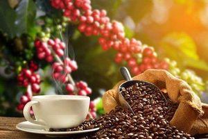 Giá cà phê hôm nay 28/5: Nhích nhẹ thêm 100 đồng/kg