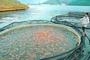 Thủy sản: Hút vốn đầu tư