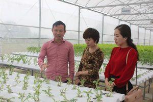 Thành công từ nông nghiệp sạch