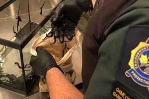 Buôn lậu 5.000 con đỉa sống qua sân bay: Hành khách lĩnh án phạt hàng chục nghìn đô la Mỹ