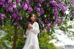 Nao lòng hình ảnh hoa bằng lăng nhuộm tím phố phường Hà Nội