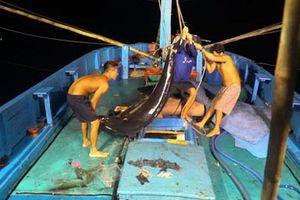 Một triệu lá cờ Tổ quốc cùng ngư dân bám biển: Căng sức, cân não giữa biển đêm