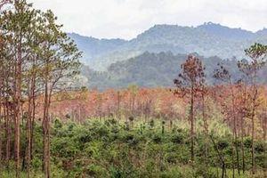 Khởi tố, bắt tạm giam 3 đối tượng hủy hoại rừng