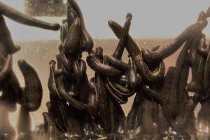 'Lạnh lưng' phát hiện gần 5.000 con đỉa trong hành lý xách tay