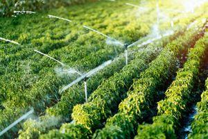 GFS dẫn đầu xu hướng phát triển nông nghiệp hữu cơ trên nền tảng công nghệ hiện đại