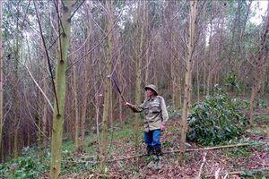 Tuyên Quang áp dụng cảnh báo cháy rừng qua điện thoại của lãnh đạo kiểm lâm