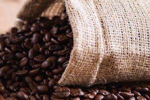 Giá cà phê hôm nay 29/5: Tiếp tục tăng nhẹ thêm 100 đồng/kg