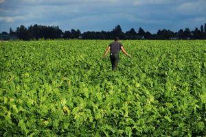 Pháp cấm sử dụng rộng rãi thuốc diệt nấm do lo ngại về sức khỏe và môi trường