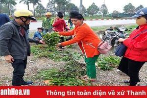 Tăng cường quản lý, ngăn chặn việc chặt phá cây rừng tự nhiên để lấy cây phong lan