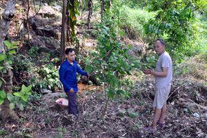 Đồng Lâm (Hoành Bồ): Nhiều mô hình thoát nghèo