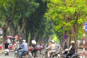 Giới trẻ thích thú 'check in' những hàng cây xanh của Thủ đô