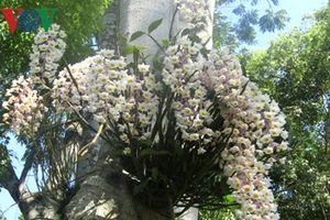 Ngăn chặn nạn hái phong lan trái phép ở rừng di sản Phong Nha-Kẻ Bàng