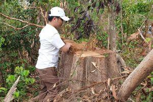 Gia Lai: Nửa năm, khởi tố 24 vụ phá rừng ở Gia Lai
