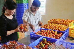 Nâng cao năng lực xây dựng chuỗi nông sản an toàn cho nông dân 6 huyện, thị xã