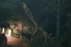 Xe bán tải lao xuống hồ Suối Vàng Đà Lạt trong đêm, tài xế thiệt mạng