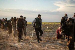 Tình hình Syria mới nhất ngày 30/5: Mỹ gửi nghi phạm khủng bố IS từ Syria sang Iraq
