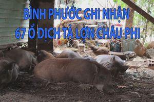 Bình Phước ghi nhận 67 ổ dịch tả lợn châu Phi tại 14 xã, phường, thị trấn